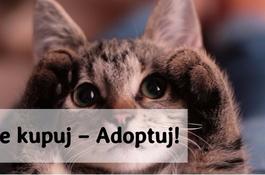 Nie kupuj – Adoptuj!