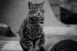 Kot w ekosystemie miejskim