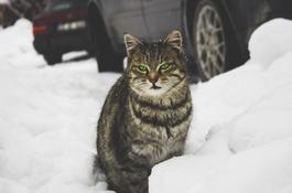 Jak pomagać kotom przetrwać zimę