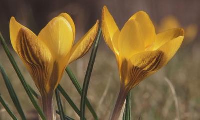 Wiosna w wejherowskim parku.