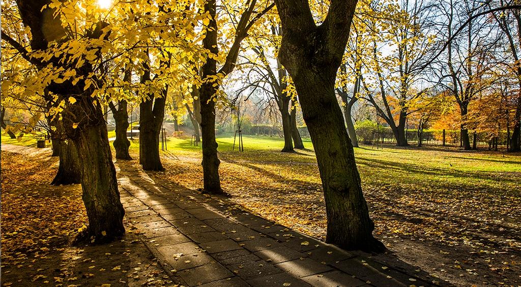Czekamy na Twój głos w sprawie zagospodarowania Parku Kaszubskiego