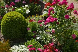 Konkurs na najładniej ukwiecony balkon, okno i ogród