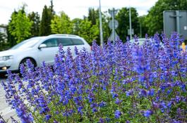 Mniej koszenia trawników – bardziej ekologicznie