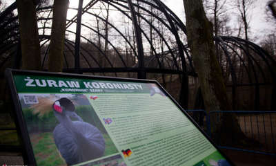 Żurawie są już w wejherowskim parku