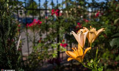 Komisja dokonała przeglądu ogrodów - 09.07.2014